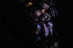 In the dark _015